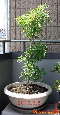 200605a
